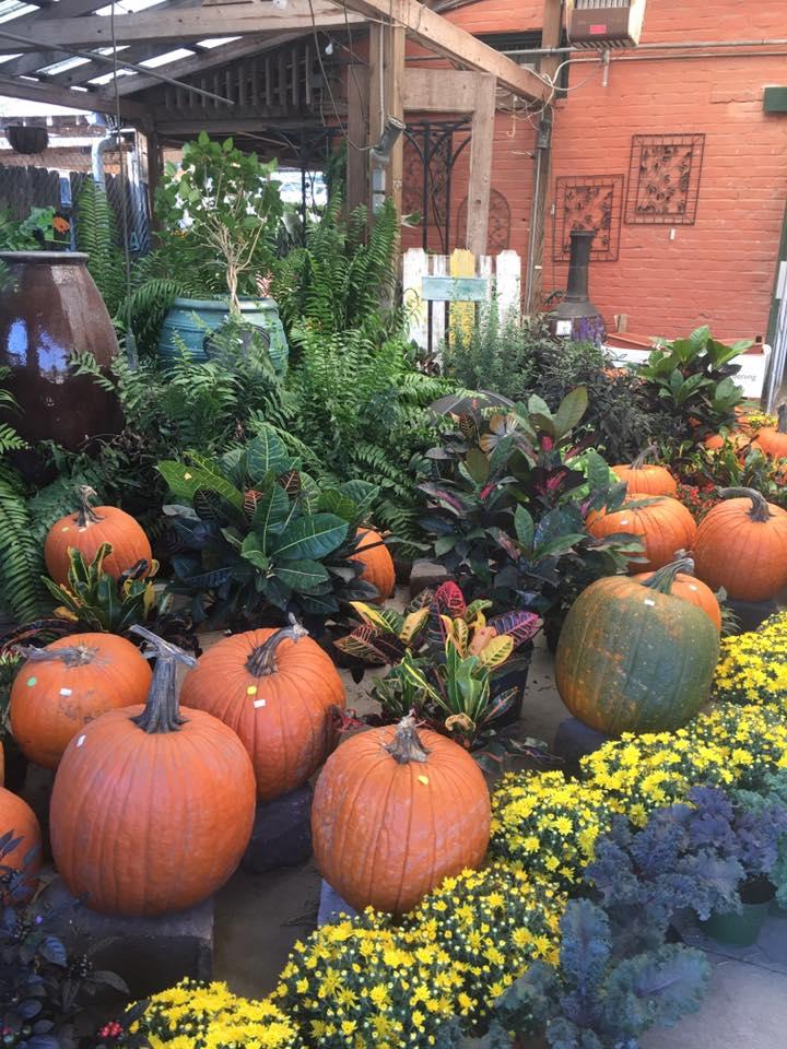 pumpkin display