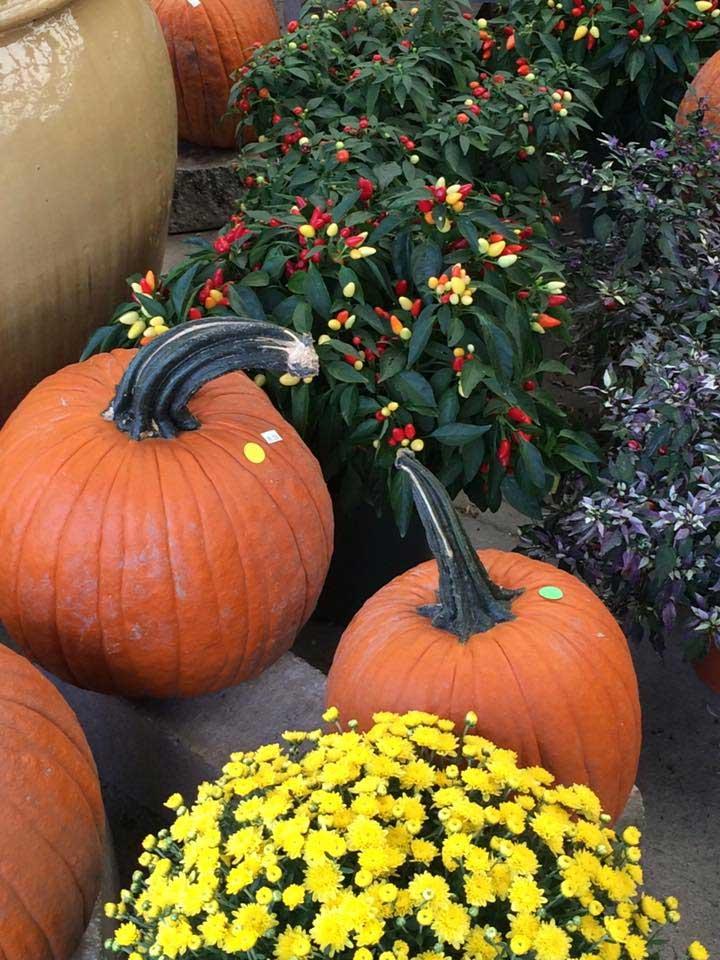 pumpkins-peppers
